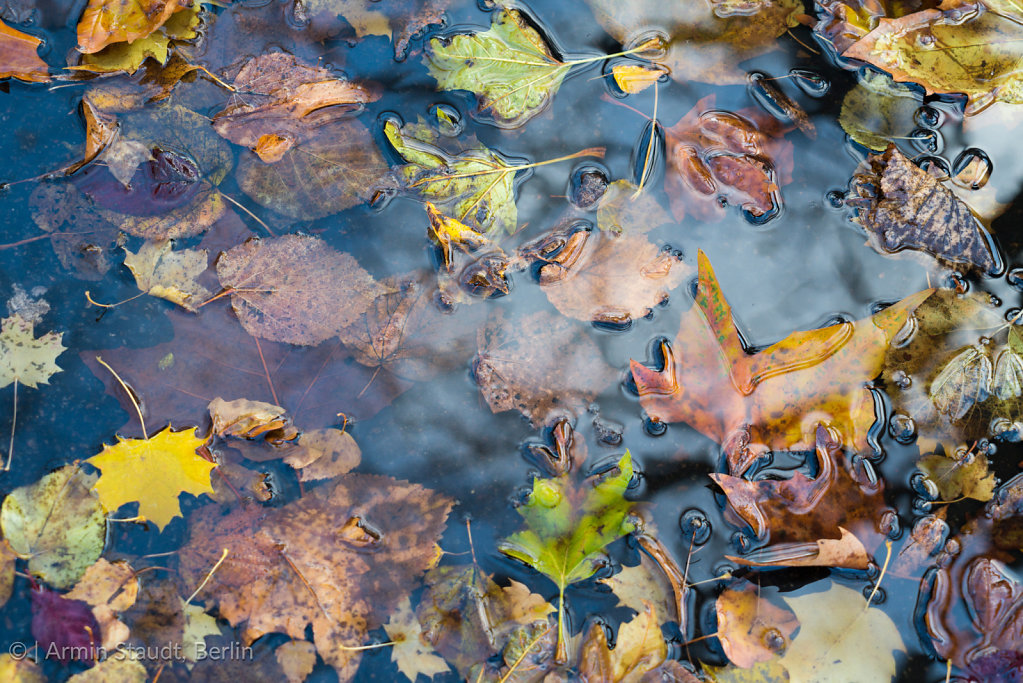 close up of autumn leaves laying in water